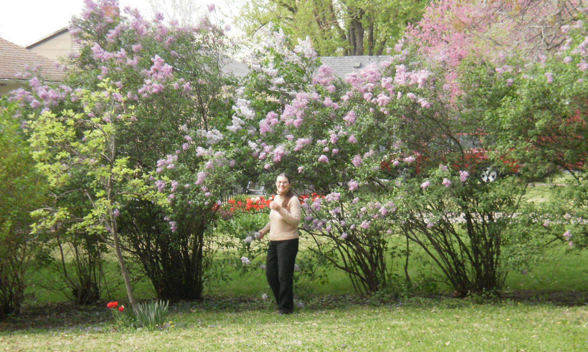 Marilyn J Evans' Blog